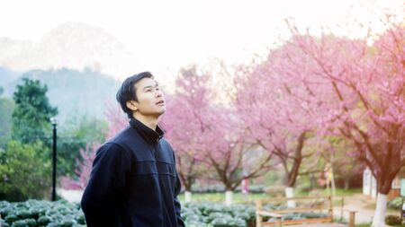 Man sitting in the cherry blossom garden at Royal Agricultural Station Angkhang.