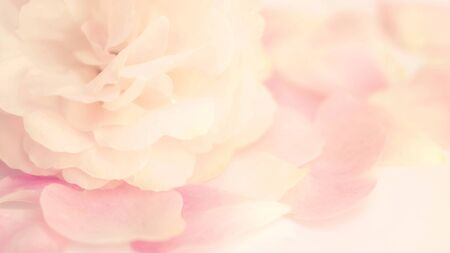 Close up of a pink rose flower. Vintage style and soft focus.