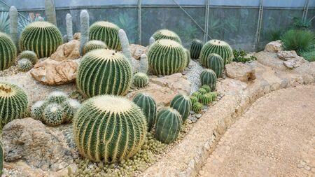 close up of cactus in a garden. Stockfoto