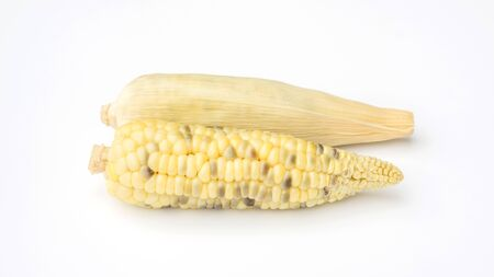Fresh waxy corn on a white background.