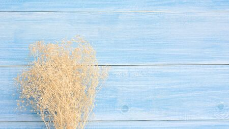 Dry Gypsophila flower on a blue wooden table. Reklamní fotografie