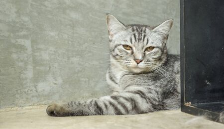 Gray striped cat lying in the room. Stock Photo
