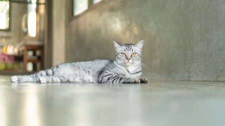 Gray striped cat lying in the room. Stock fotó