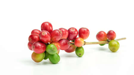 Fresh arabica coffee beans on a white background.