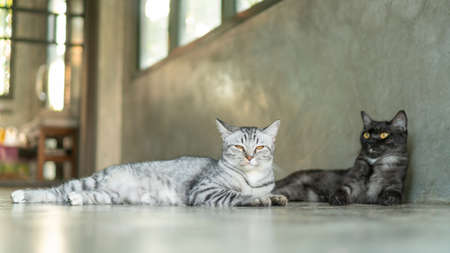 Gray striped cat and black cat lying in the room. Stock fotó