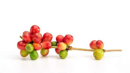 Fresh arabica coffee beans on a white background.