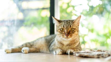 Gray striped cat lying in the room. 免版税图像