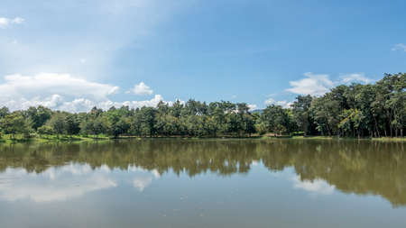 Blue sky and trees reflections on the lake. 免版税图像