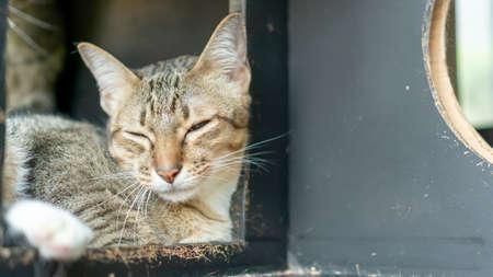 Gray striped cat lying in the room. 版權商用圖片