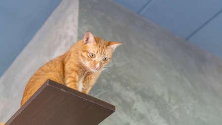 Cute ginger cat sitting on shelves.