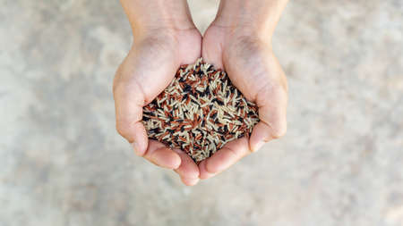 Man holding organic three colors (red, black, and brown) rice on a gray background.