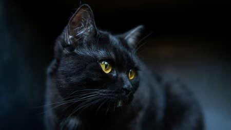 Black cat sitting in the room.