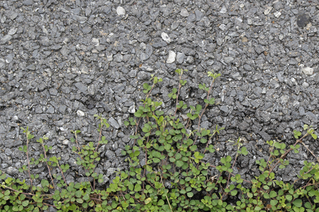 Grass on the asphalt surface background