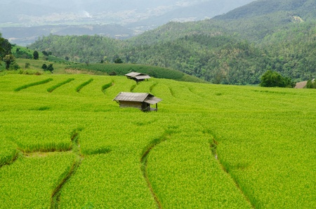 Green Terraced Rice Field in Chiangmai, Thailand photo
