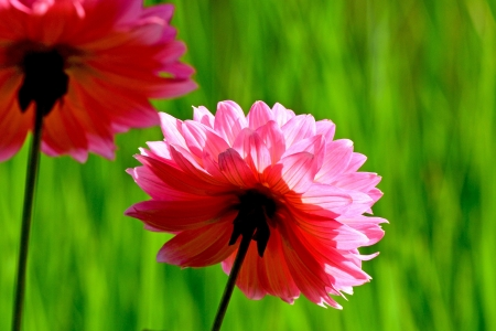 Flower with green background  nature background  photo