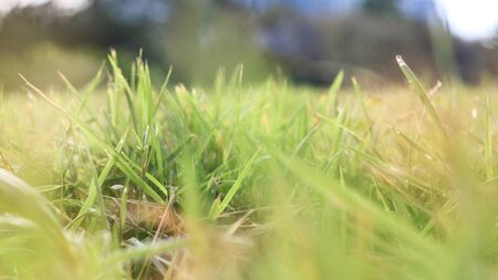 Grasses and bokeh background