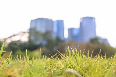 Grasses and Buildings