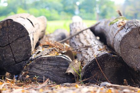 Wood logs in the park