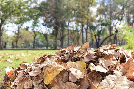 Fallen leaves on the grass floor 写真素材