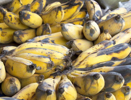 uneatable: Yellow ripe bananas rot fungus on stalls background.