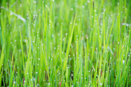blurred of bokeh on green grass at morning. subject is blurred.