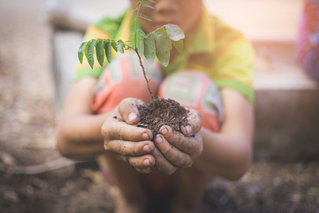 hand of children holding plant and soil with bokeh and nature background, save the world and World Environment Day concept at sunny day. subject is blurred 스톡 콘텐츠