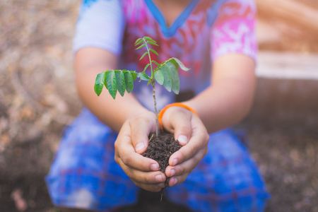hand of children holding plant and soil with bokeh and nature background, save the world and World Environment Day concept at sunny day. subject is blurred