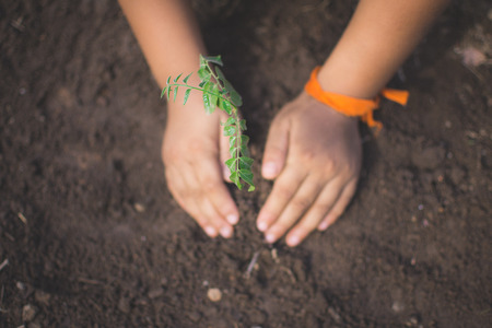 hand of children holding plant and soil with bokeh and nature background, save the world and World Environment Day concept at sunny day. subject is blurred Reklamní fotografie