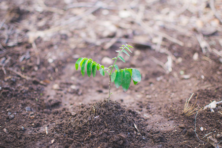 new born of tree on soil, World Environment Day concept. soft focus. Stockfoto