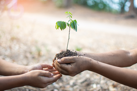 hand of children holding plant and soil with bokeh and nature background, save the world and World Environment Day concept at sunny day. subject is blurred Banco de Imagens