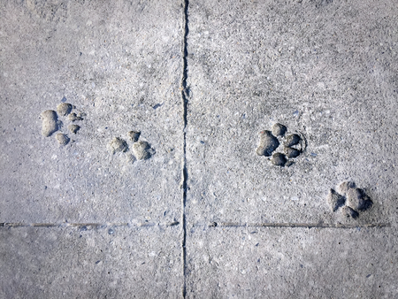 Dogs Footprint on Cement Floor Stock Photo