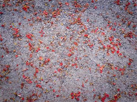 Full Frame Background of Dry Red Flower Petals on the Floor Stok Fotoğraf