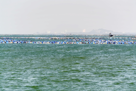 Group of Blue and White Buoys Floating in the Sea