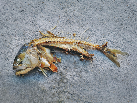 Cooked Mackerel Fish Leftover Showing Bones on Floor