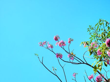 Low Angle View of Pink Flowering Plant Against Clear Blue Sky