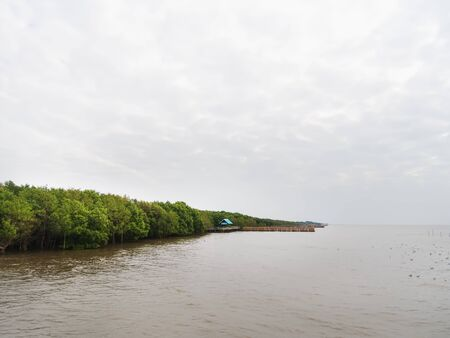 Tranquil Scenery of Trees Along the Coast