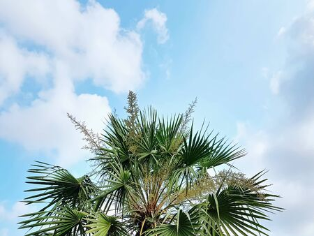 Low Angle View of Palm Tree Top Against Cloudy Sky