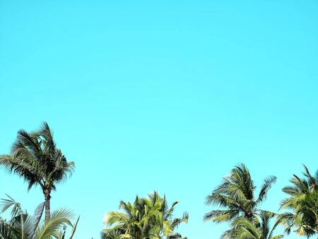 Low Angle View of Coconut Trees Top Against Blue Sky
