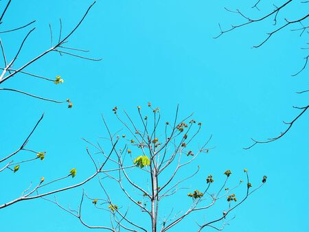 Low Angle View of Tree Branches with a Few Leaves Against Blue Sky
