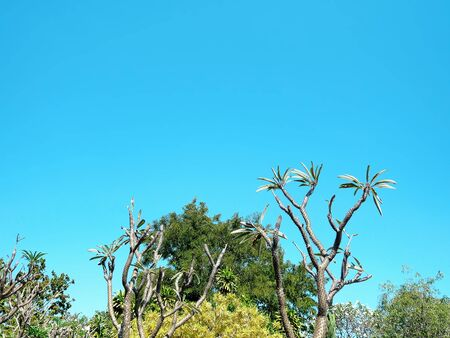 Low Angle View of Tree Top Against Clear Blue Sky
