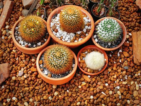 High Angle View of Group of Succulent Plants in Small Pots