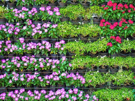 Full Frame Background of Various Kinds of Potted Flowering Plants on Shelves 스톡 콘텐츠
