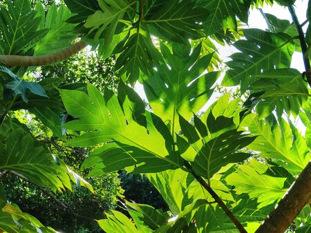 Low Angle View Under Green Leaves of Tree
