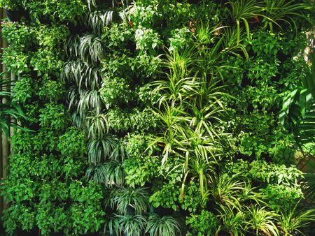 Full Frame Background of Fresh Decorative Green Plants Wall 스톡 콘텐츠