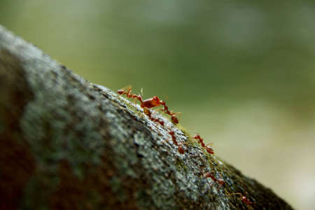 Ant Harmonious photo