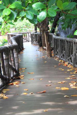 Curve through the trees photo
