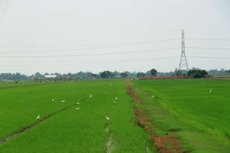 Fields with high voltage power pole photo