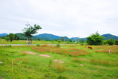 livelihoods: Life stlye of people at Pai in Thailand  Stock Photo