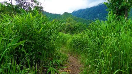 wild grass: Bosque Hierba salvaje en Tailandia