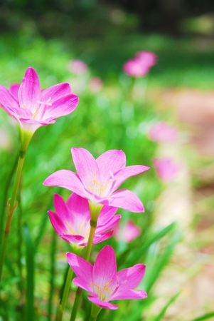 Pink flower garden photo